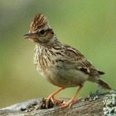 Перелетные птицы возвращаются. Новости из регионов
