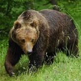 Новости о медведях в конце марта 2012