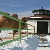 В КСК Левадия открыт Караван-сарай: Приезжайте кататься на верблюде и ослике