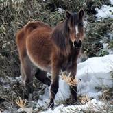 На Курилах от голода умирают дикие лошади