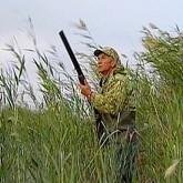 Утвержден порядок осуществления производственного охотничьего контроля