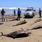 Экологические катастрофы. Новости в начале мая 2012