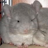Новости о песцах и других пушных животных. Май 2012