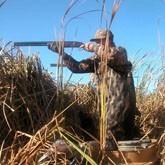 Новости об охоте, животных и птицах