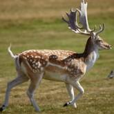 Новости о диких животных и об охоте. Май 2012