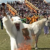 Ысыах, Фестивали староверов и казачьей культуры и другие национальные праздники
