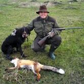 Отстрел подмосковных лис, учет гусей и уток, и другие новости об охоте