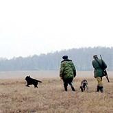 Новости о правилах охоты, охотничьих билетах, утках, кабанах и медведях
