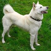 Охотничьи собаки: Выставки и возрождение собаководства