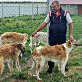 Традиции национальной русской охоты: Разведение борзых для охоты в Урюпинске