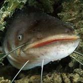 Рыболовные трофеи: сом на 81 кг, пираньи и акула