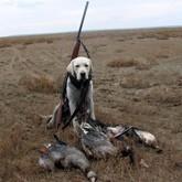 Открытие охоты на пернатых и карантин племзавода под Тверью (ВИДЕО)