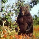 Начало охоты 2012 на медведя, кабана и косулю в Поморье и Ростовской области