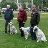 Выставки охотничьих собак в Туле, Кузбассе и Брянске