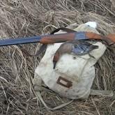 Сроки осенней охоты 2012 в Подмосковье, Горном Алтае и Орловской области