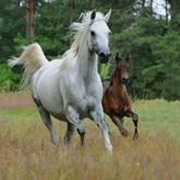 О конном спорте, конном походе, конных пробегах и Дне лошади