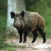 Открытие осенней охоты и запреты охоты 2012