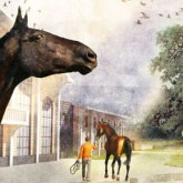 Конноспортивный комплекс Левадия - Национальный конный парк