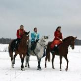 Конные прогулки в Тульской области для владельцев лошадей