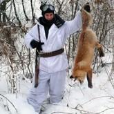 Приглашаем на охоту на зайца и лисицу в Тверскую область