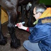 Ветеринарная служба предлагает услуги ударно-волновой терапии