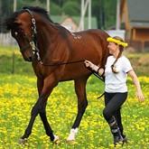 Обучение верховой езде и прокат лошадей в Подмосковье