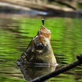 Рыбалка в Подмосковье: Ловля карпа и карася