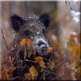 Зимняя охота 2012 в Тверской области