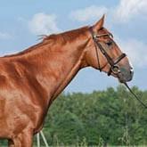 Кредит на покупку лошади от АКБ МОСОБЛБАНК ОАО