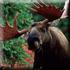 Охота на лося в Тверской области