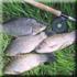Рыбалка на базе Дворянское гнездо