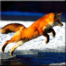 Охота на зайца и лису